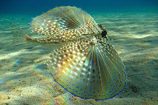 Azoren Meerestiere